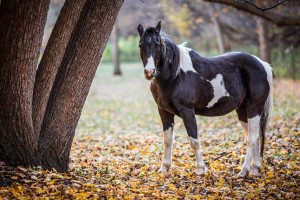 A Horse Among the Leaves